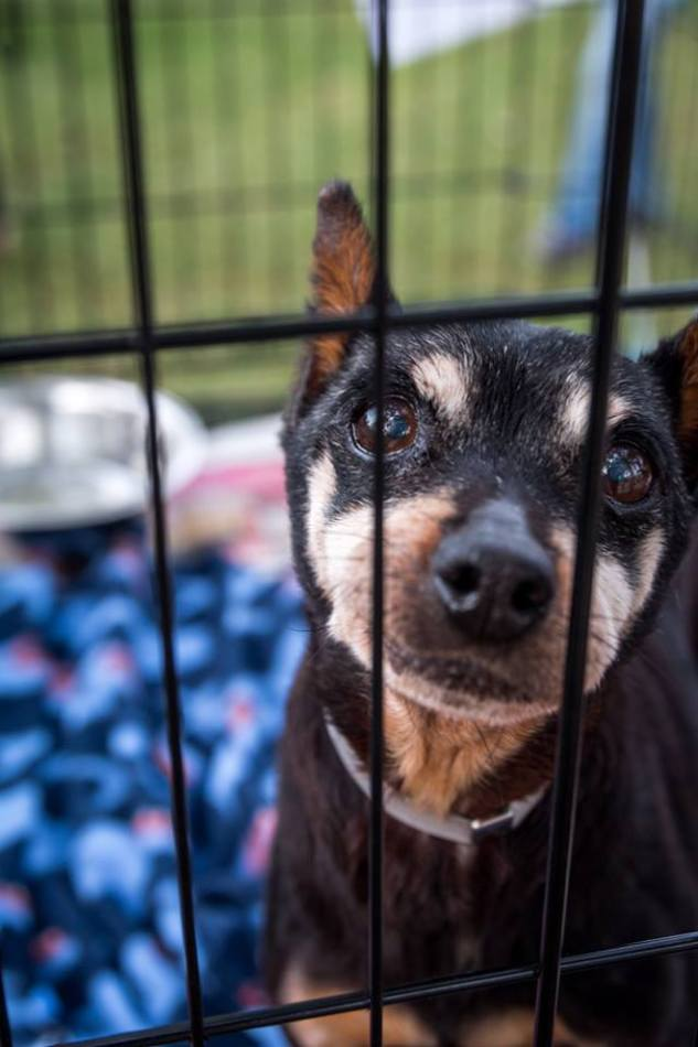Home for the Holidays promotes the adoption of over 500 pets.