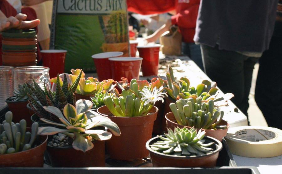 SUP sells succulents st lunch to fund for a new aquaponics garden