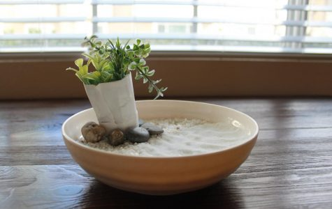 Creating your own DIY zen garden can be a stress relieving and aesthetically pleasing activity.